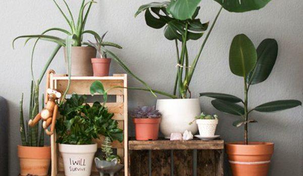 desain-indoor-garden-di-rumah