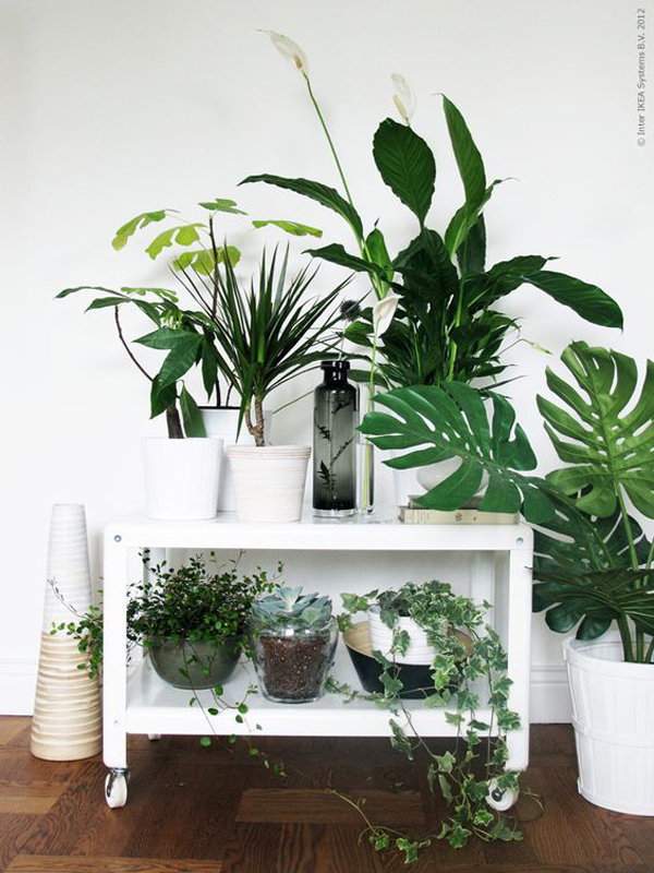 lemari-display-untuk-tanaman-hias