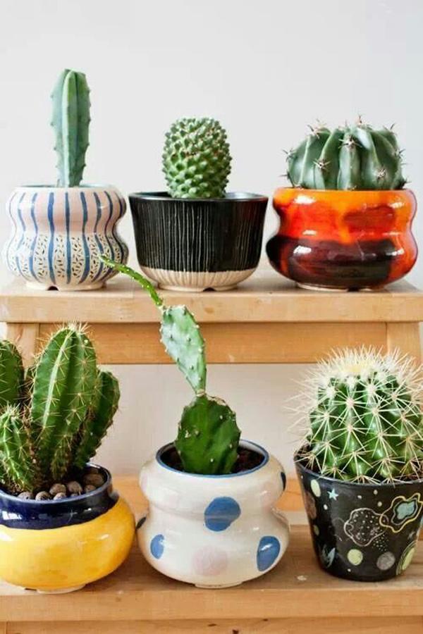tanaman-kaktus-untuk-mempercantik-rumah