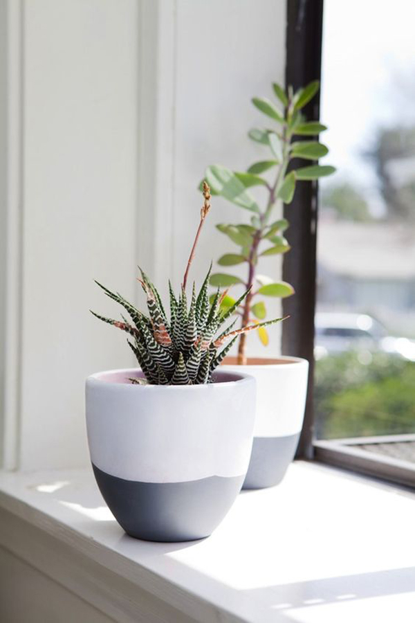 tanaman-sukulen-cantik-untuk-dekorasi-jendela