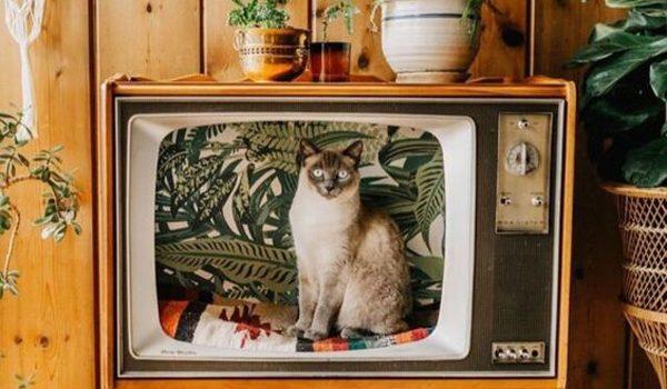 desain-rumah-kucing-bergaya-vintage-dari-TV-bekas