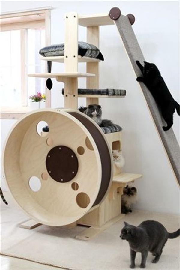 ide-ruang-bermain-kucing-dalam-rumah