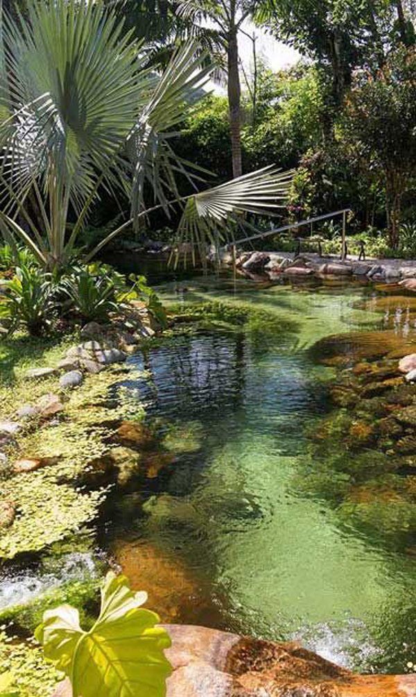 dekorasi-sungai-dan-rawa-untuk-halaman-belakang