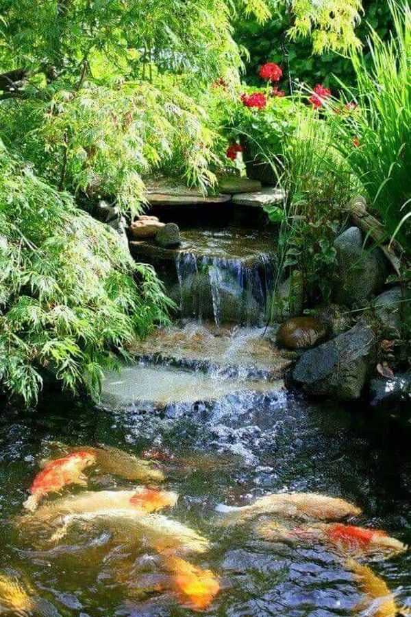 sungai-dan-kolam-koi-untuk-lanskap-taman