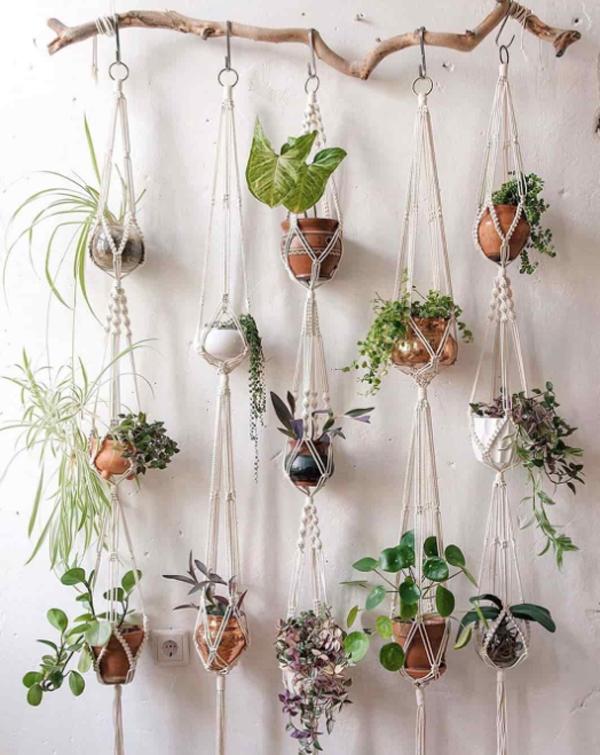 tanaman-gantung-kamar-tidur-estetik-dengan-batang-kayu