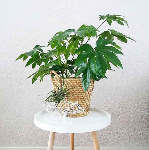 tanaman-kamar-tidur-dengan-pot-anyaman