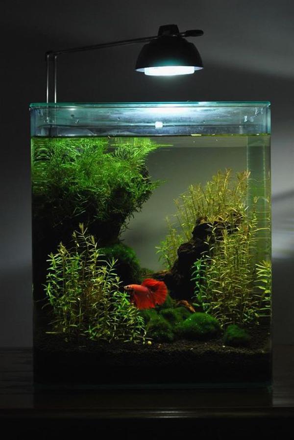 aquarium-ikan-cupang-tema-natural