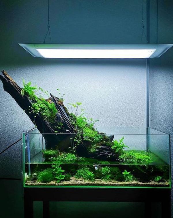 aquascape-dengan-log-kayu-alami