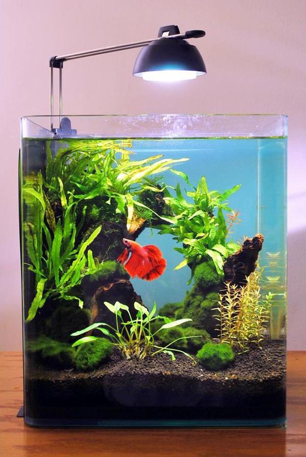 aquascape-ikan-cupang-dengan-lampu