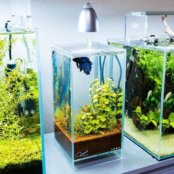 aquascape-ikan-cupang-mini