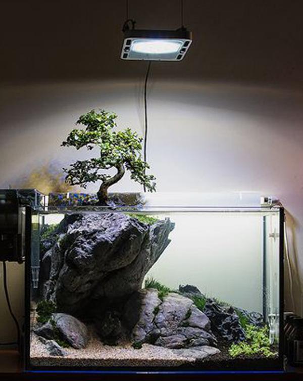 aquascape-low-budget-dengan-bonsai-mini