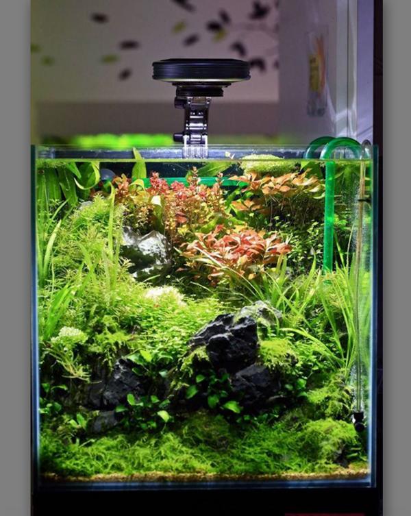 aquascape-nano-dengan-tema-natural