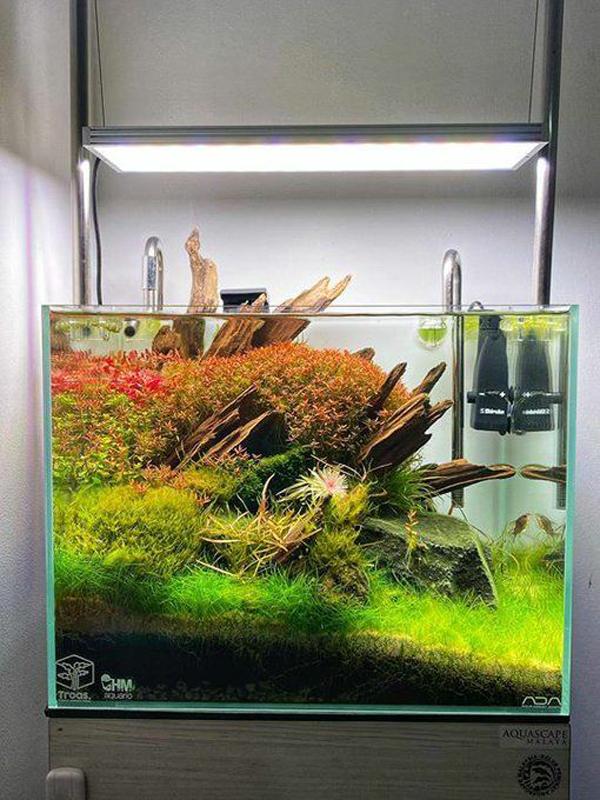 aquascape-natural-dengan-tank-nano