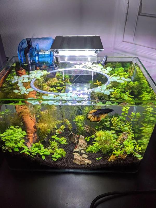 dekorasi-aquarium-ikan-cupang-terbaik