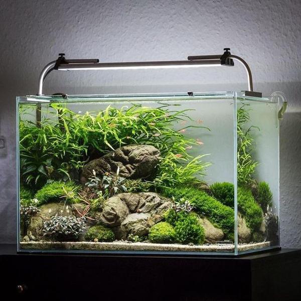 desain-aquascape-natural-terbaik