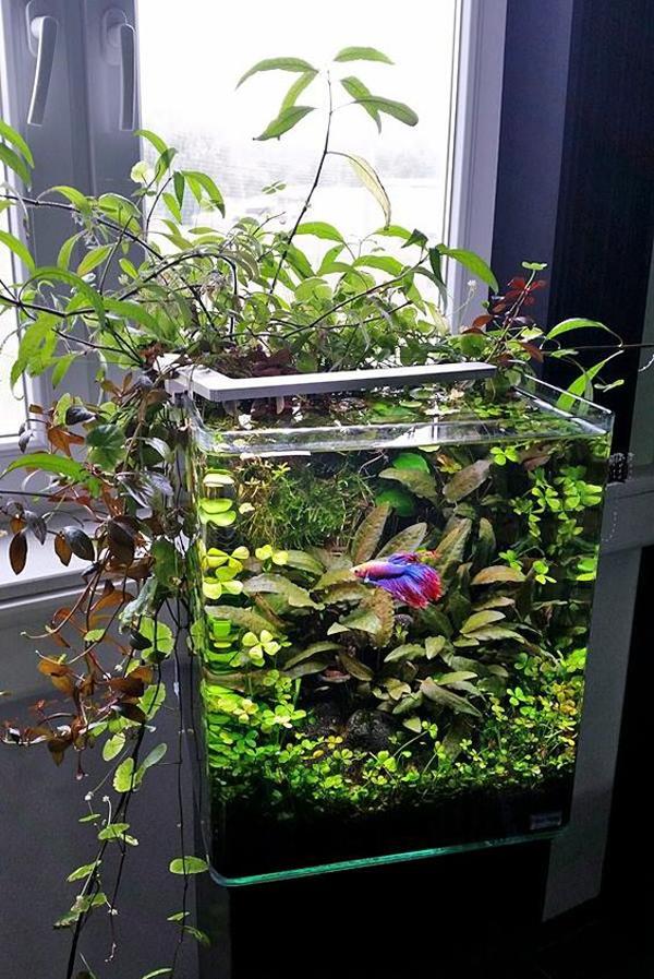 desain-aquascape-untuk-ikan-betta
