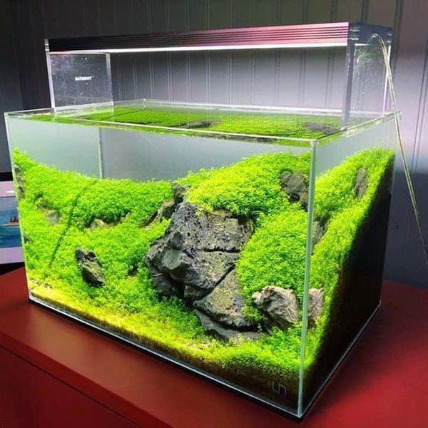 ide-aquascape-iwagumi