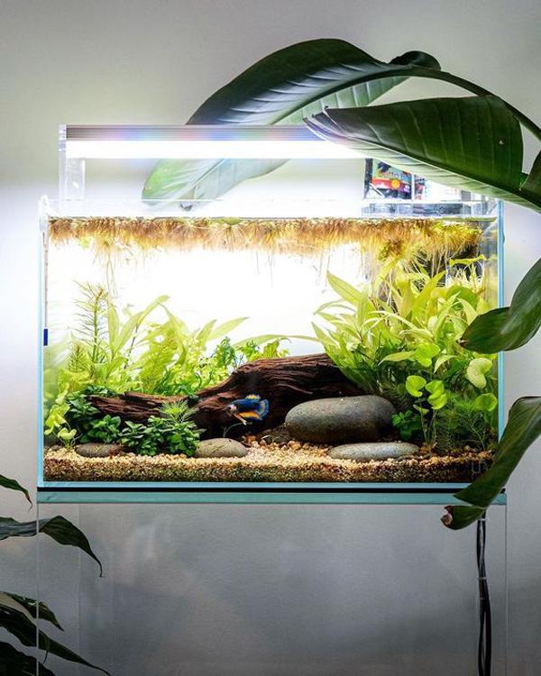 ide-nano=aquascape-cantik