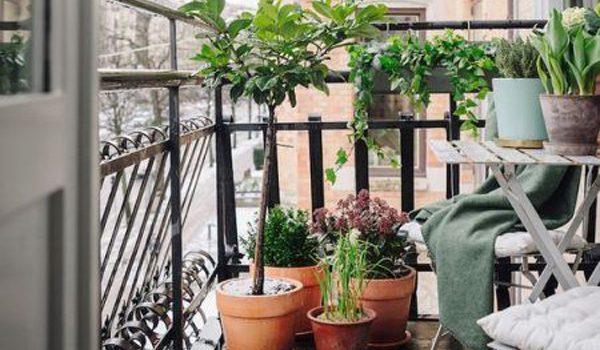 ide-tanaman-balkon-kecil
