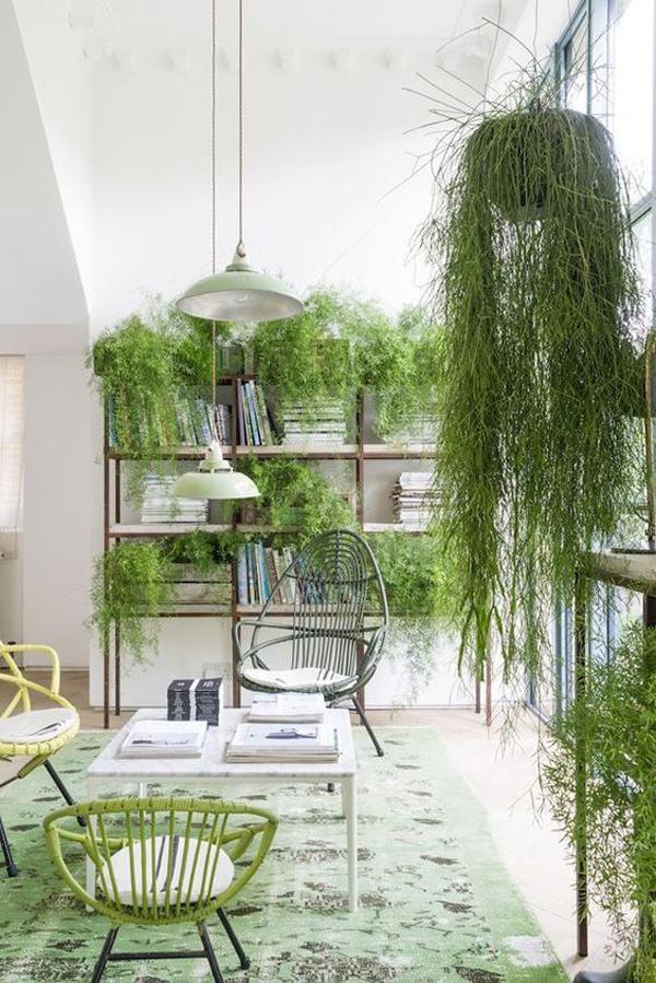 tanaman-rumput-hias-untuk-gaya-interior