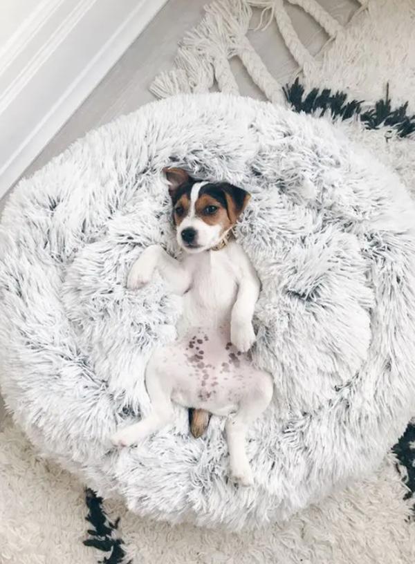 desain-karpet-lantai-dan-tempat-tidur-anjing-bulat