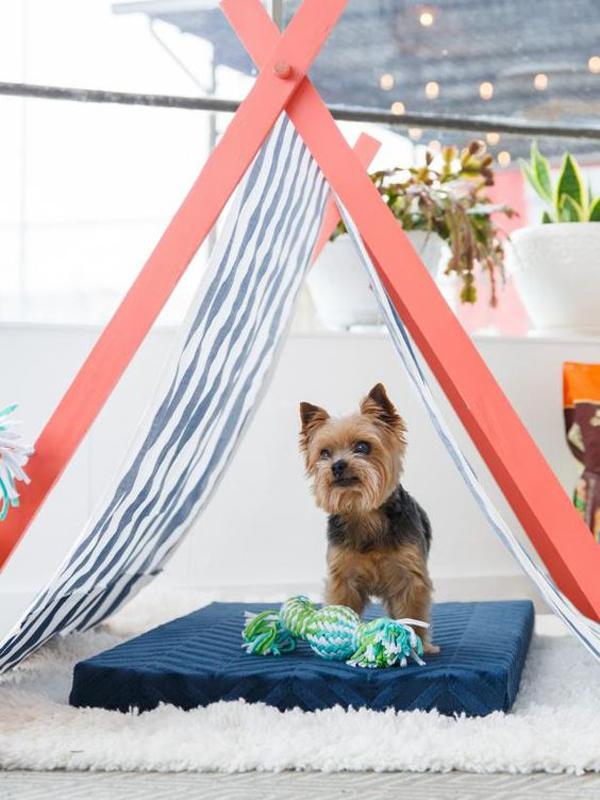 ide-tenda-untuk-tempat-tidur-anjing