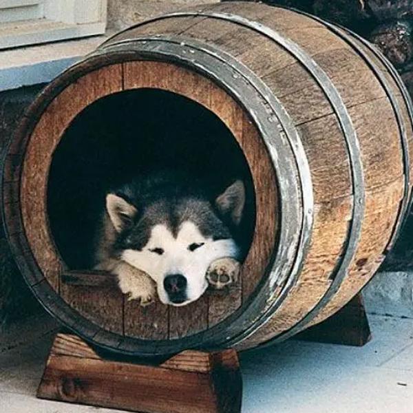 tempat-tidur-anjing-DIY-dari-tong-minuman