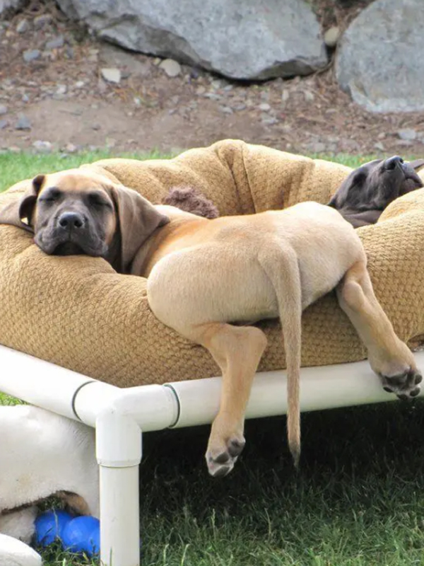 tempat-tidur-anjing-besar-dari-pipa