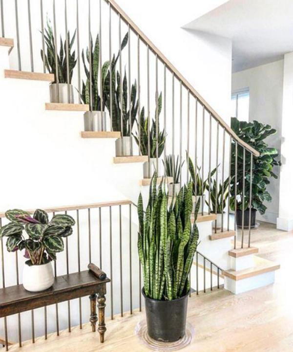 dekorasi-tanaman-lidah-mertua-untuk-tangga-rumah