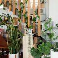 ide-tanaman-hias-di-tangga-rumah