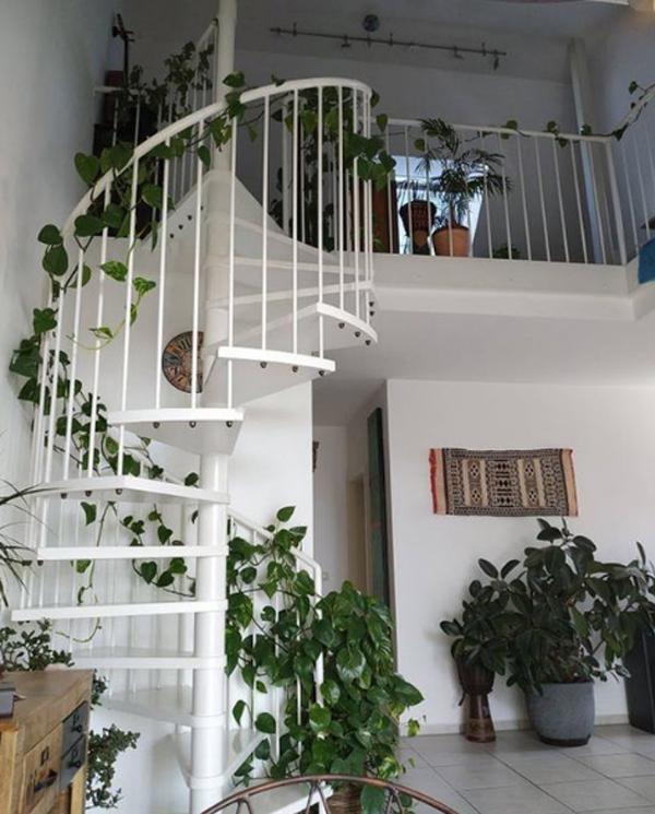 ide-tanaman-sirih-rambat-untuk-tangga-rumah