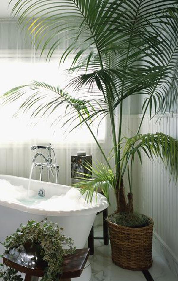 bak-mandi-nyaman-dengan-tanaman-palem-hias