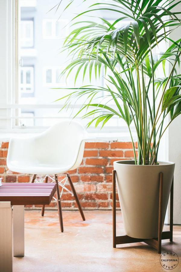 dekorasi-ruangan-dinding-bata-dengan-tanaman-palem