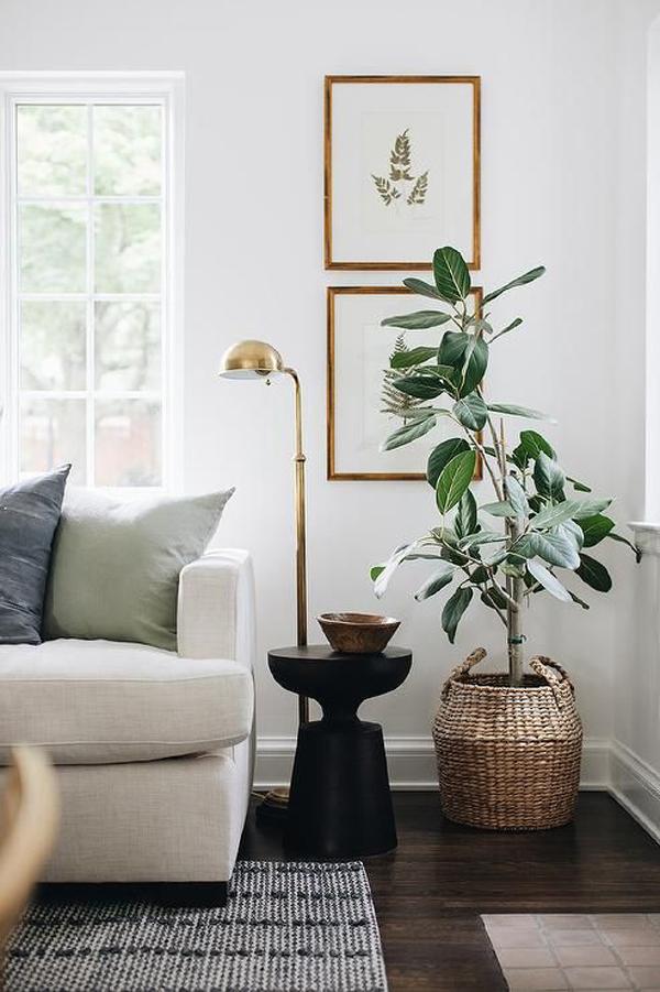 desain-ruang-tamu-minimalis-dengan-satu-tanaman-besar