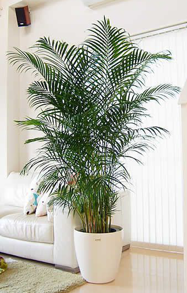 desain-ruang-tamu-minimalis-dengan-tanaman-palem-besar