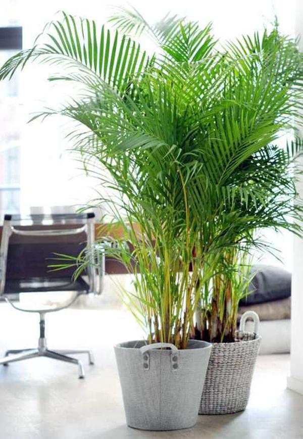 ide-dekorasi-palem-indoor-dengan-DIY-pot