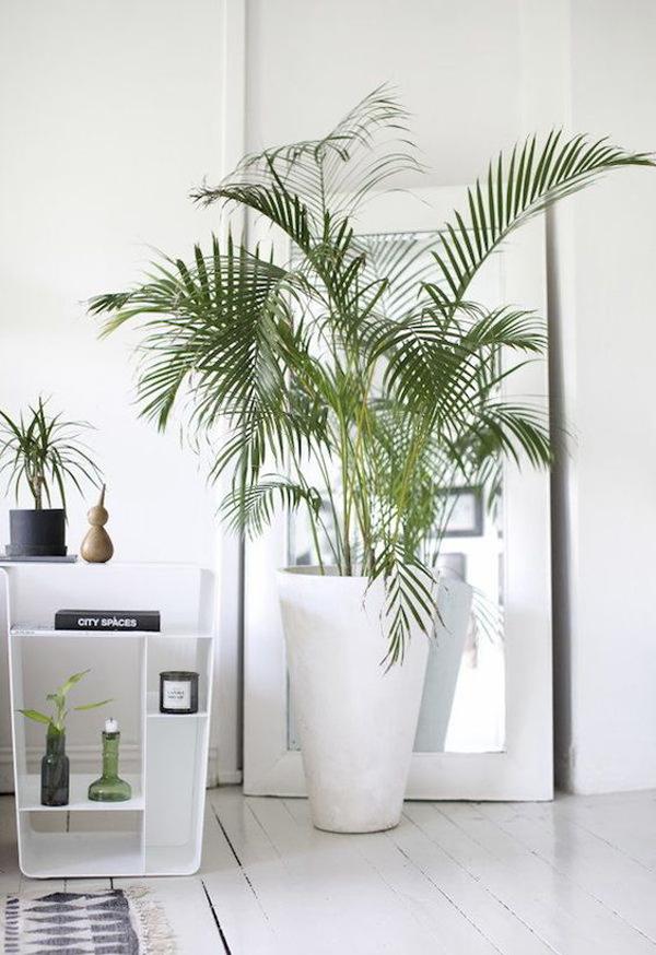 ide-palem-hias-indoor-bergaya-minimalis