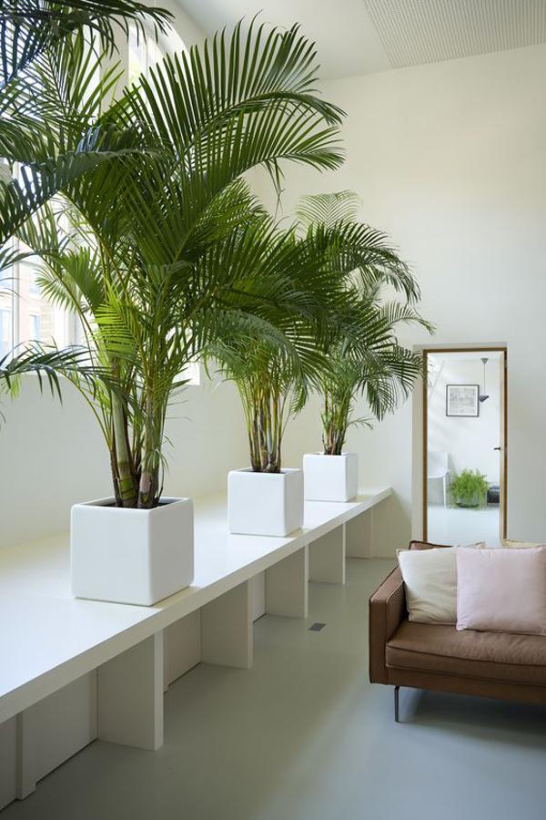 interior-bergaya-hutan-tropis-dengan-tanaman-palem